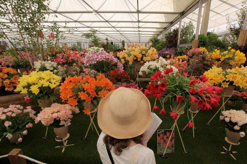Королевская выставка цветов вЧелси