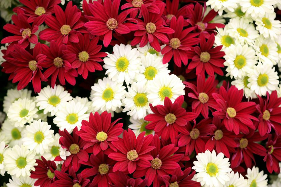flowers7 Королевская выставка цветов в Челси