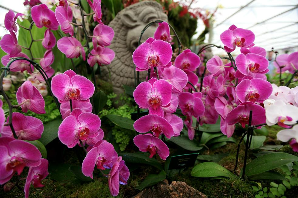 flowers8 Королевская выставка цветов в Челси