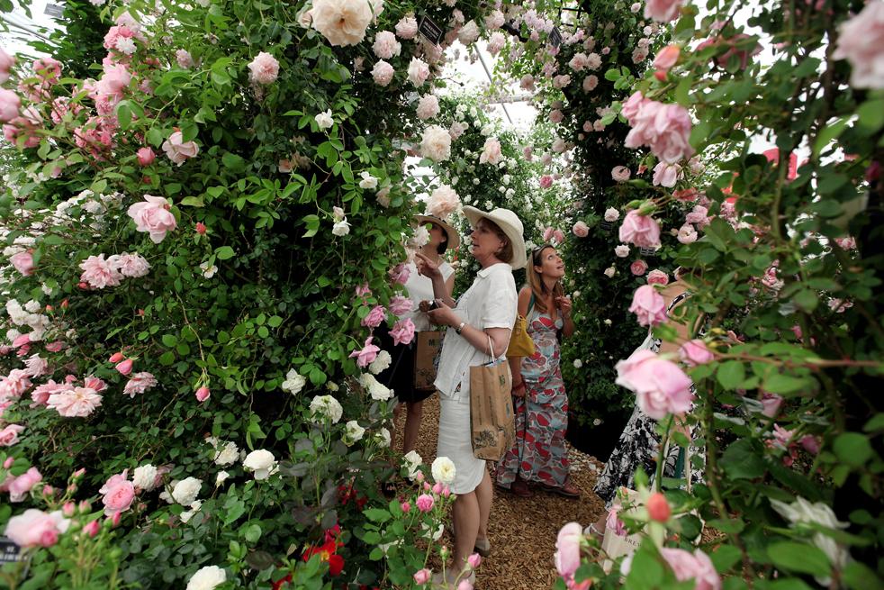 flowers9 Королевская выставка цветов в Челси
