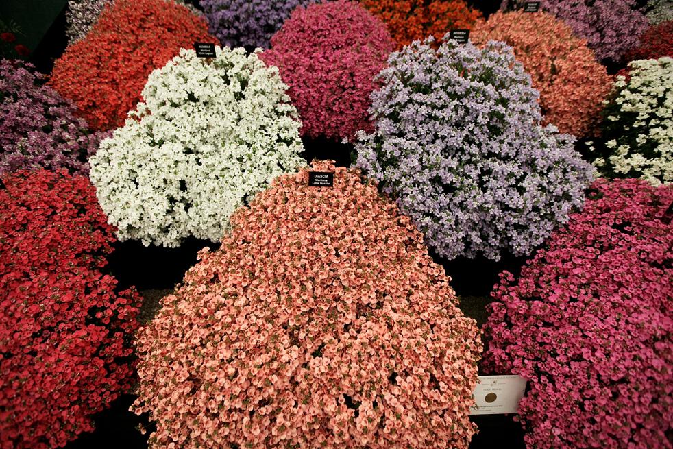 flowersA Королевская выставка цветов в Челси