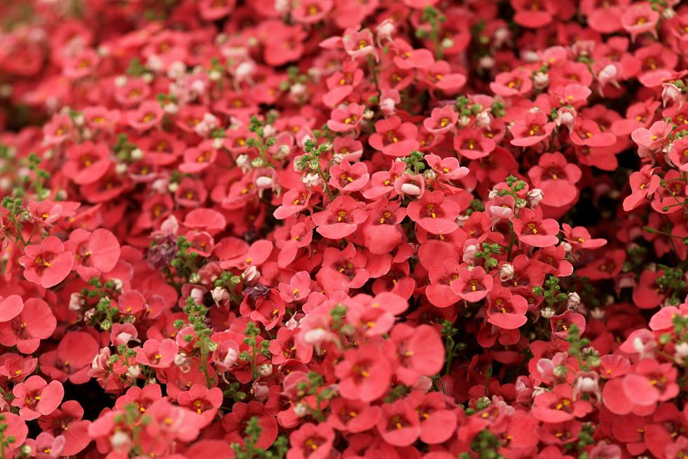 flowersC Королевская выставка цветов в Челси