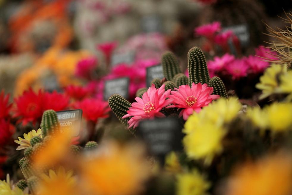 flowersD Королевская выставка цветов в Челси