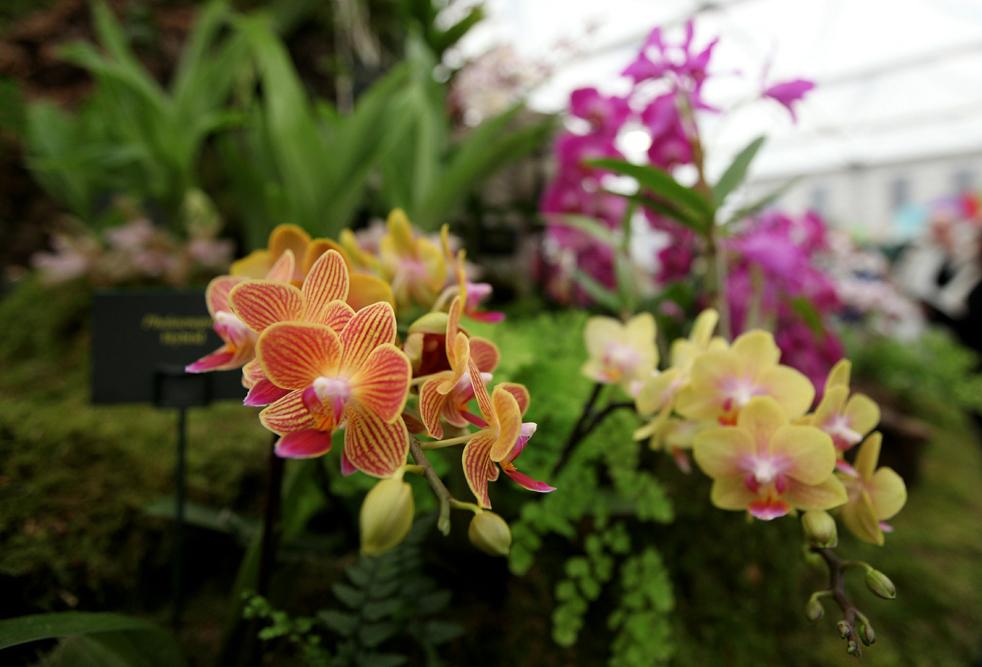 flowersE Королевская выставка цветов в Челси