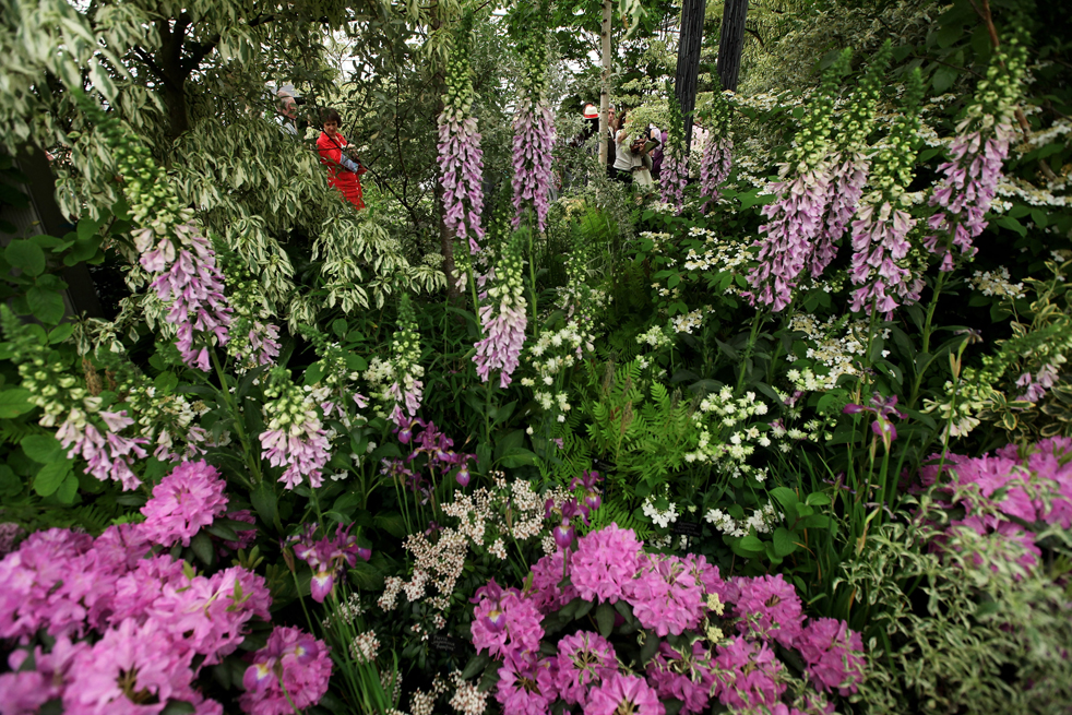 flowersH Королевская выставка цветов в Челси