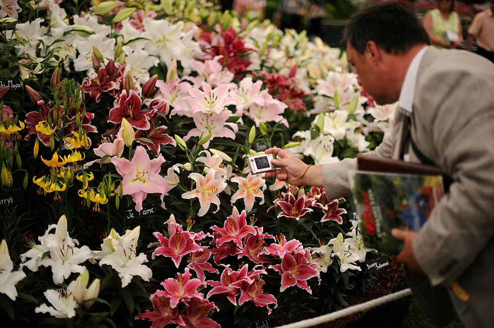 celebrity photo цветы № 123787