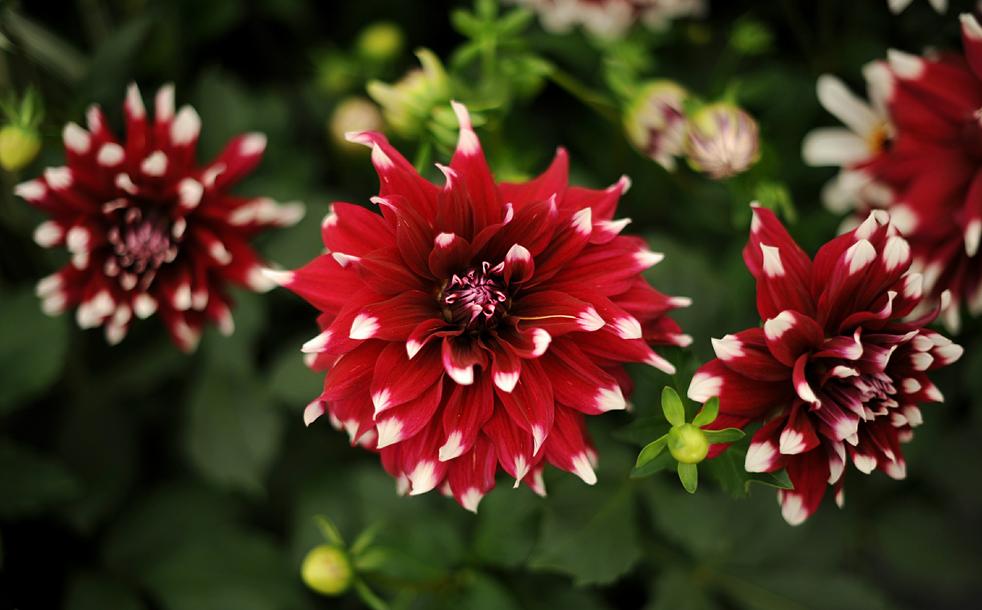 flowersM Королевская выставка цветов в Челси