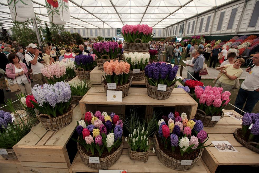 flowersN Королевская выставка цветов в Челси