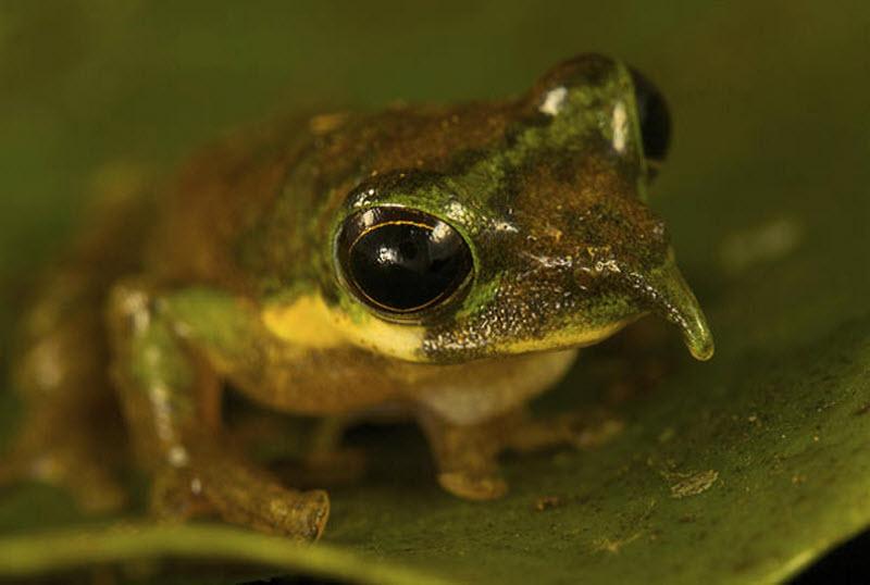 images33 spesies baru di Indonesia
