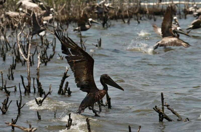 Нефть достигла берегов Луизианы