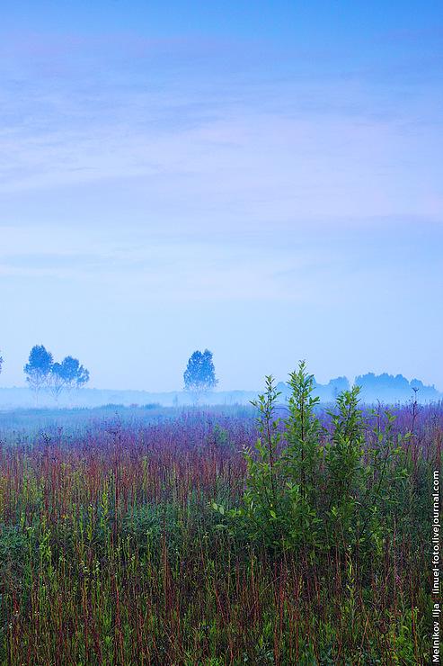 Пустые Холмы 2010
