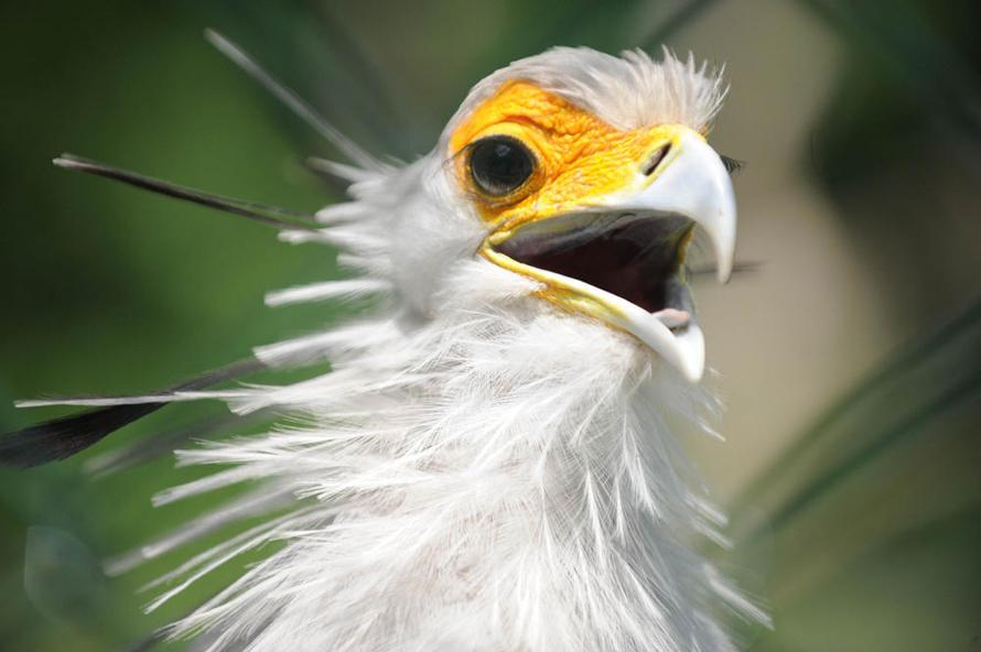 В природе эти хищные птицы живут на