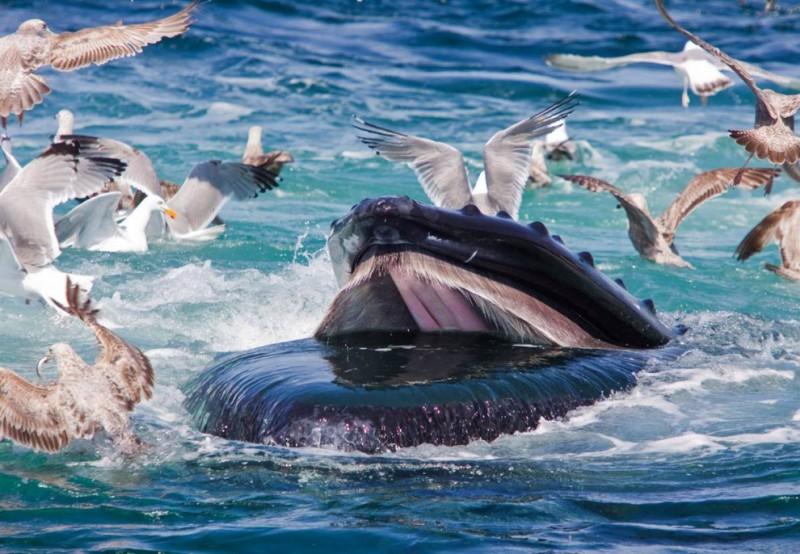 images16 800x554  Удивительный подводный мир