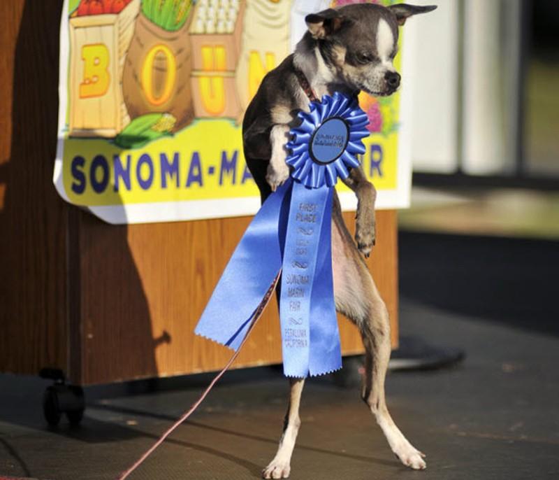 images48 Самая страшная собака в мире