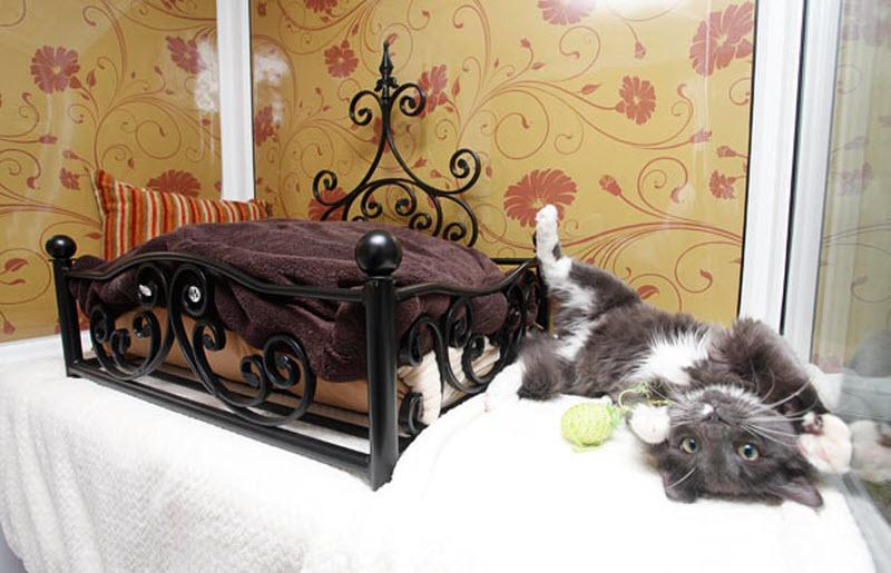 Картинки по запросу отеле для кошек «Longcroft Luxury Cat Hotel»