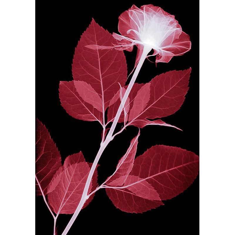 Цветы в рентген аппарате