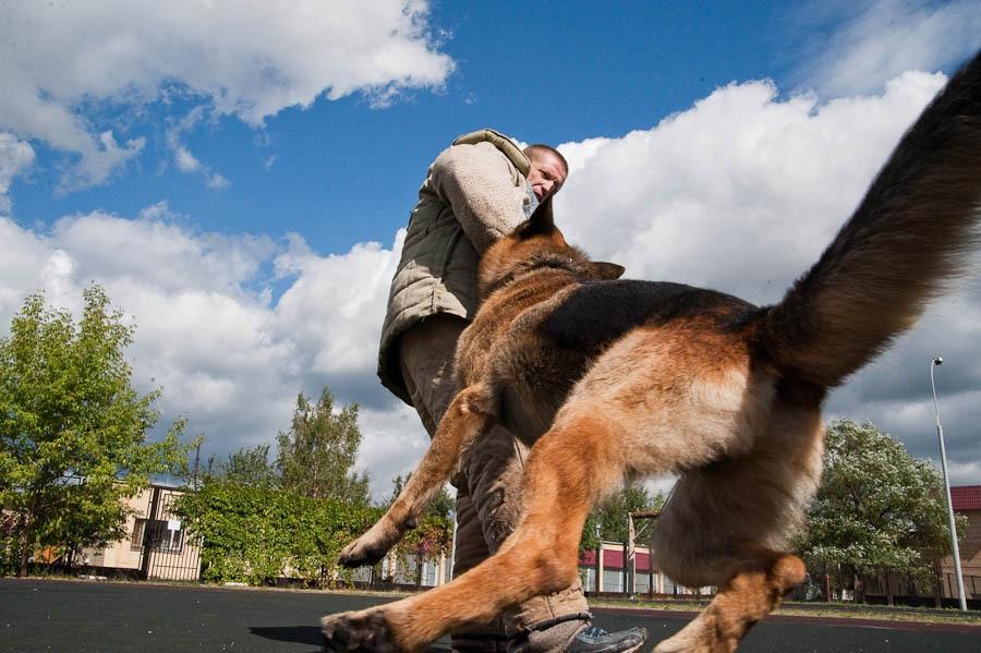 Собаки МВД