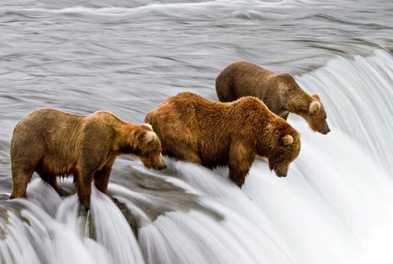 images13 Медвежья рыбалка