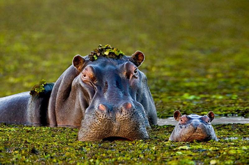 «Мои любимые семьи животных» СтиваБлума