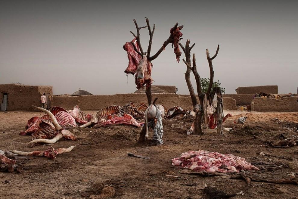 nigerfoodcrisis21 990x661 Продовольственный кризис в Нигере