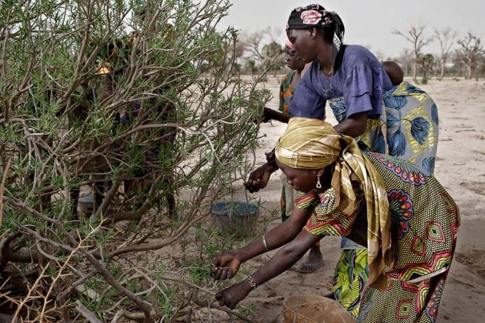 nigerfoodcrisis22 990x659 Продовольственный кризис в Нигере