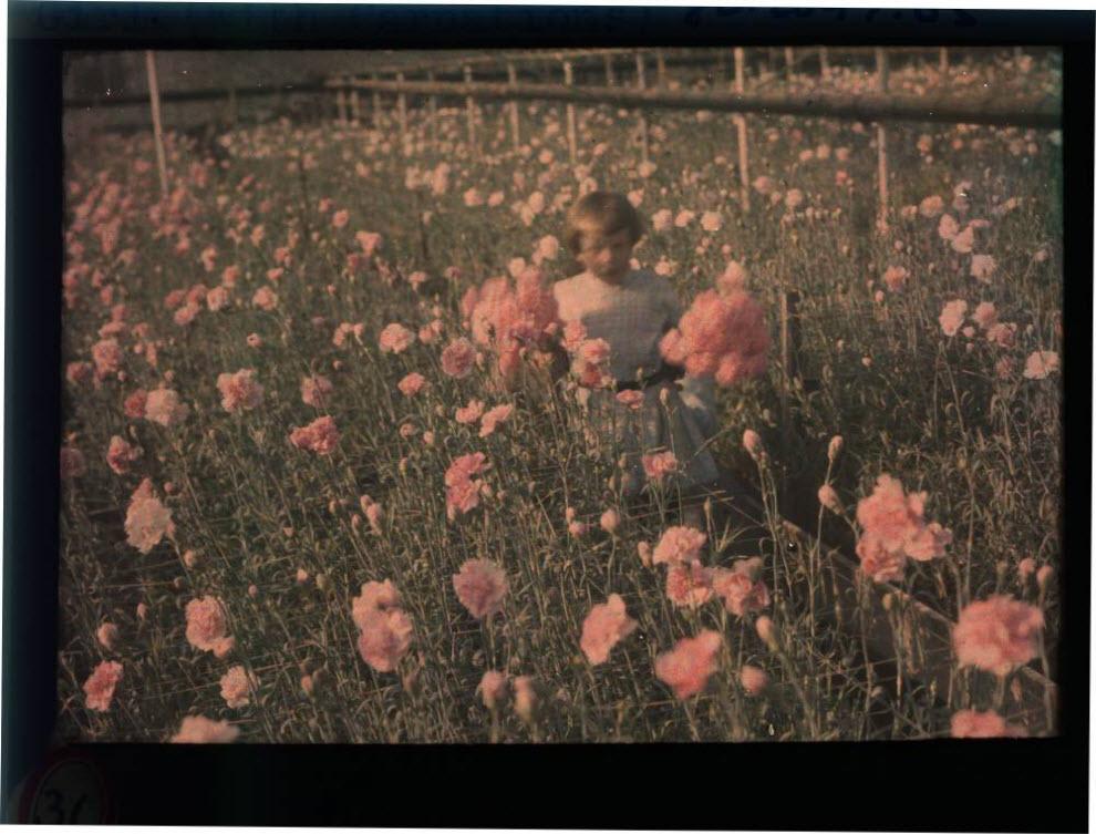 135 Автохром Люмьер   цветные фотографии начала XX века
