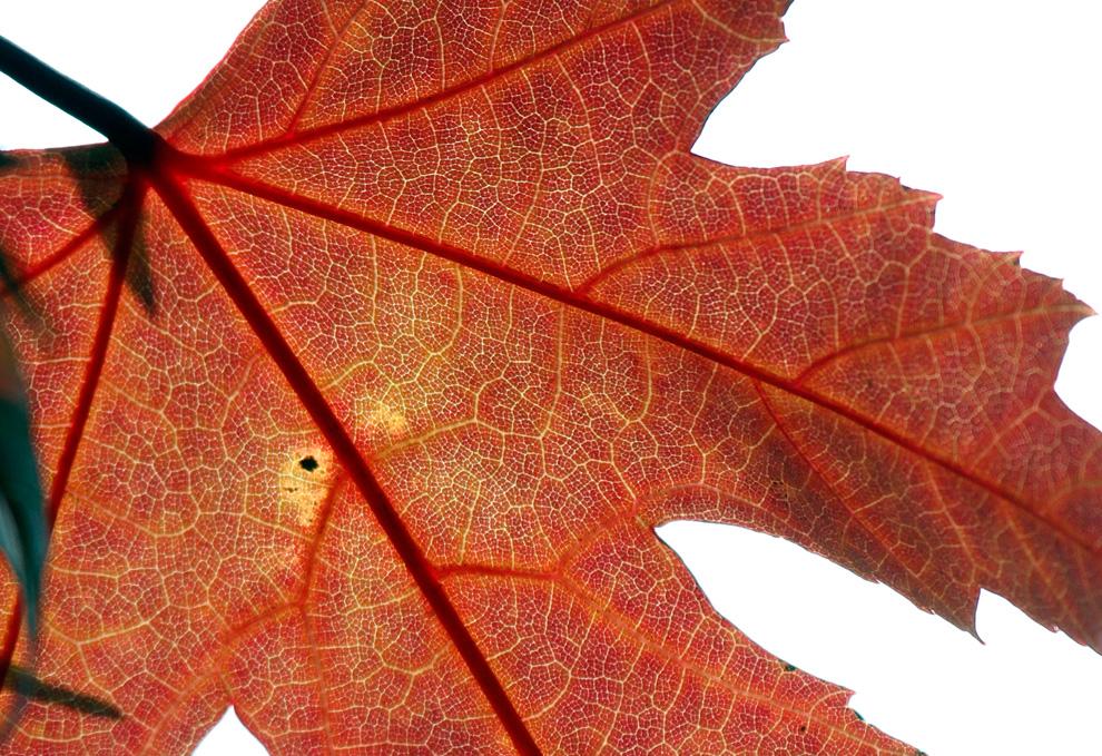 Осень в воздухе