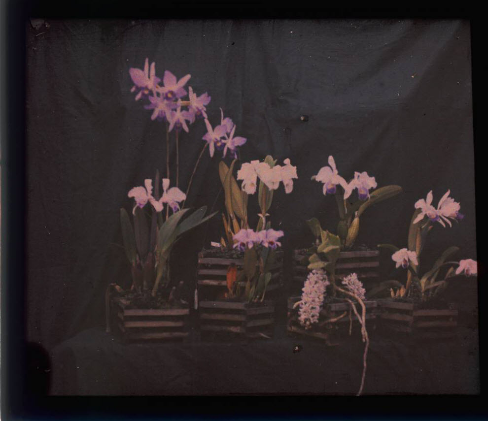 155 Автохром Люмьер   цветные фотографии начала XX века