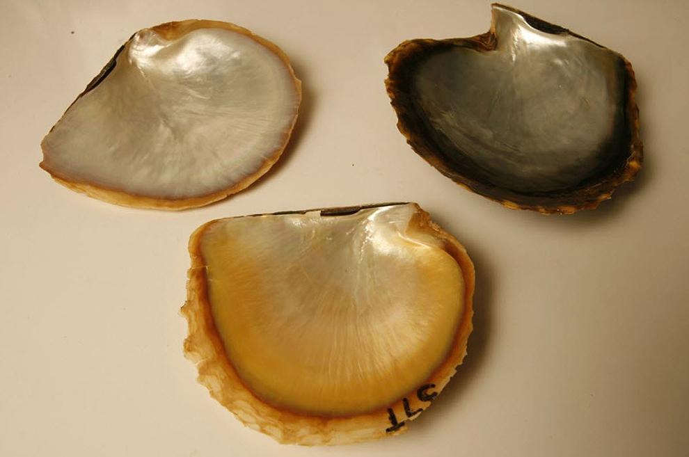golden pearls09 Золотой жемчуг