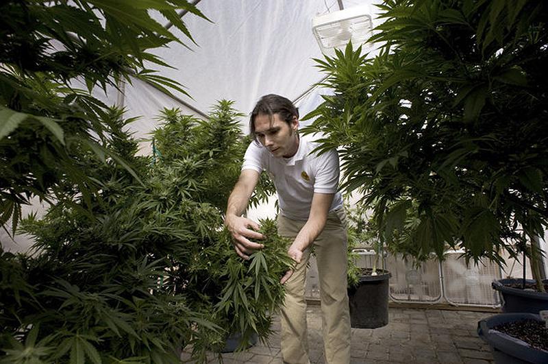 Марихуану при язве желудка марихуану курил каждый день