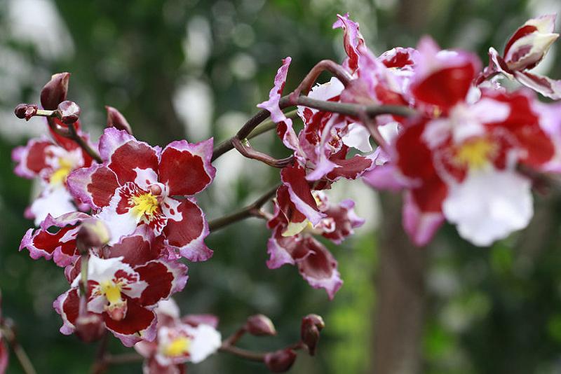 0754 Выставка орхидей