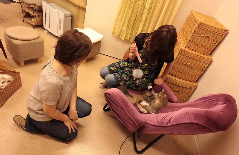 1052 Кото кафе в Осаке