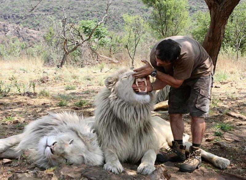 11161 Заклинатель львов