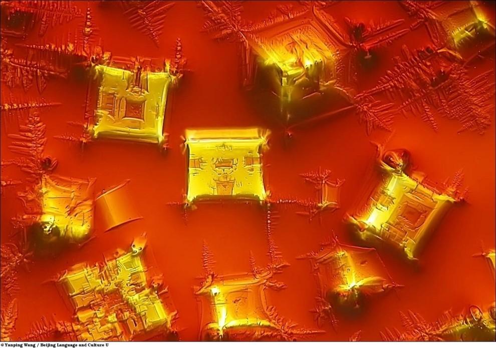 Nikon Small World Photomicrography Competition