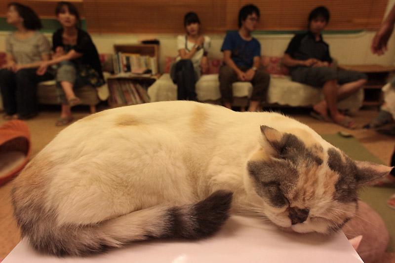 1248 Кото кафе в Осаке