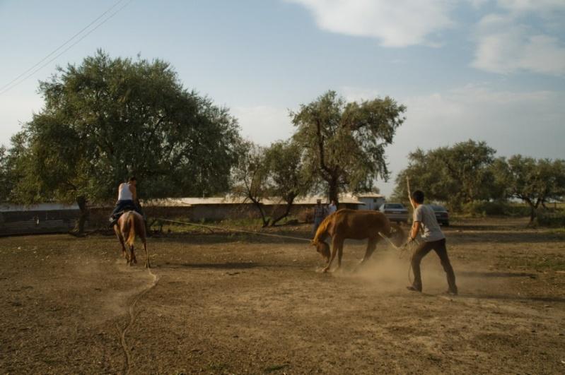 От лошади до казы