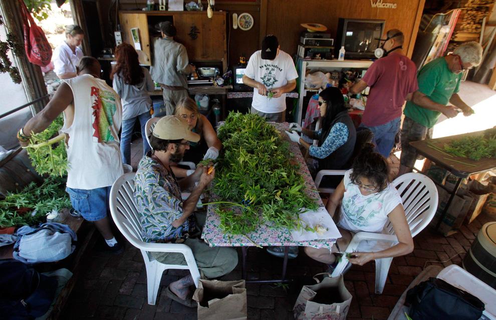 Сбор марихуаны в калифорнии посади марихуана