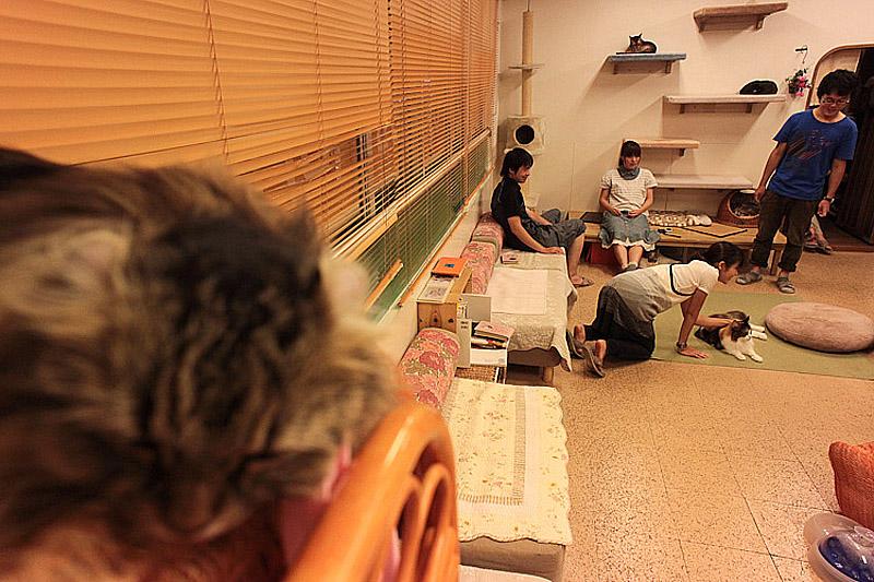928 Кото кафе в Осаке