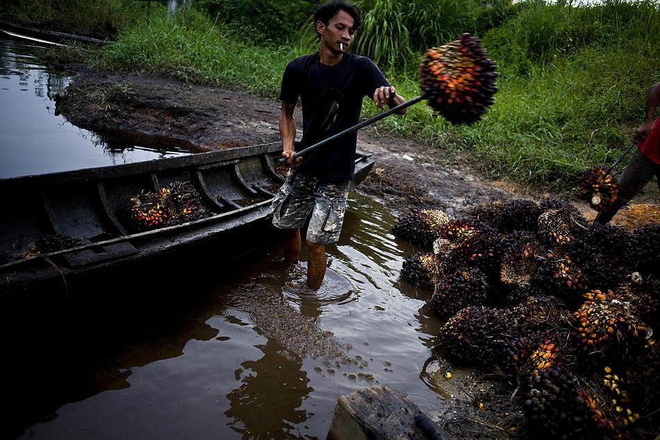 0111 Deforestasi di Sumatera