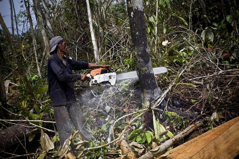 0510 800x533 Deforestasi di Sumatera
