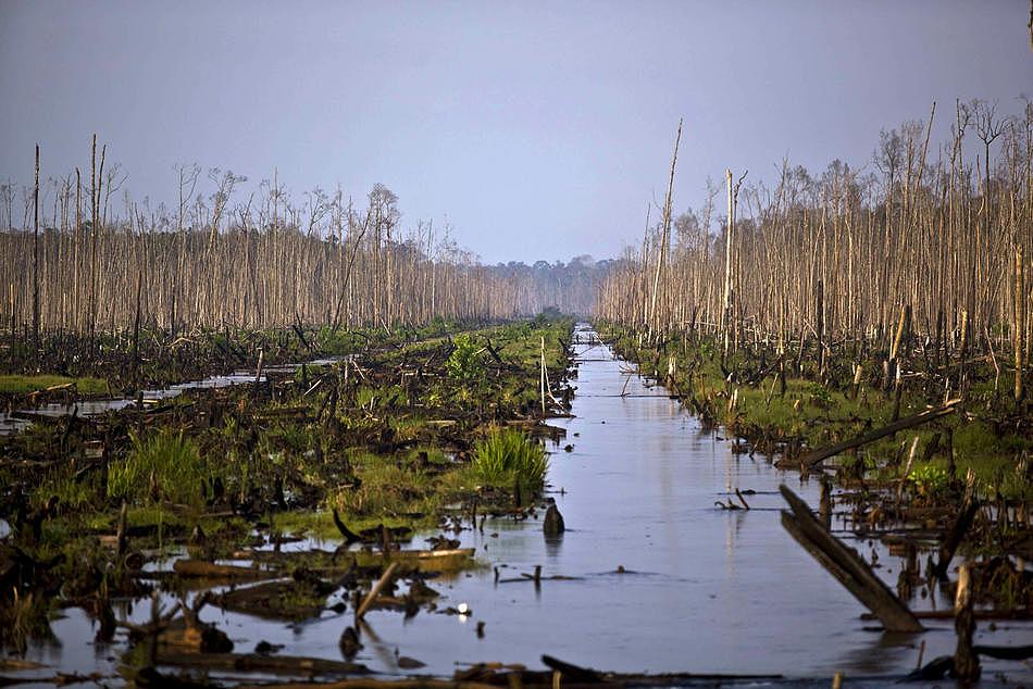 0610 Deforestasi di Sumatera