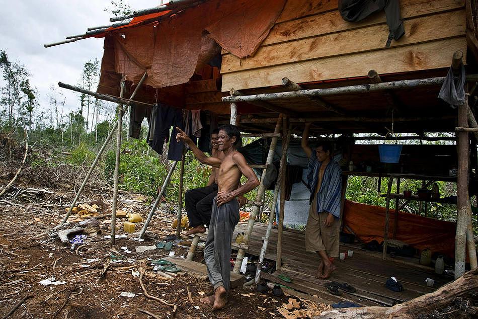 0710 Deforestasi di Sumatera