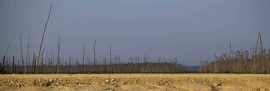 0810 Deforestasi di Sumatera