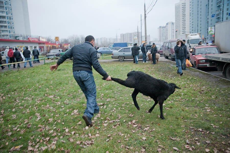 0933 Праздник жертвоприношения Курбан Байрам в Москве