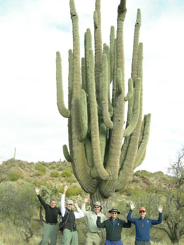 0 23b7a Гигантские кактусы Сагуаро