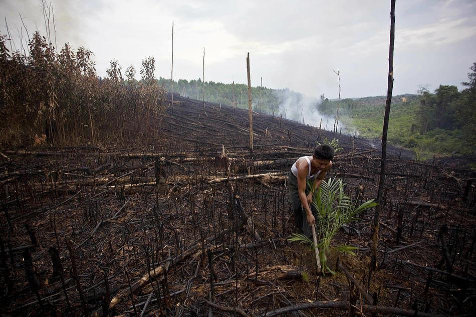 1028 Deforestasi di Sumatera