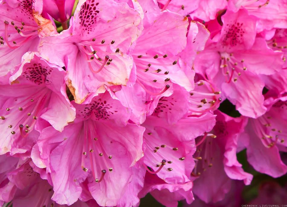 Цветочки, WA, USA