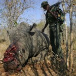 Кровавая война Африки с браконьерством