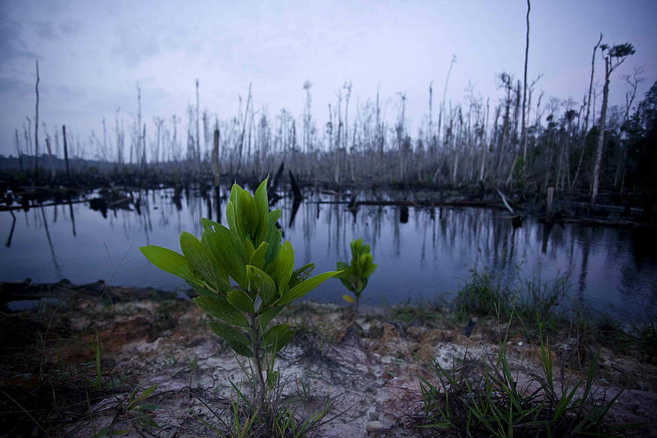 1130 Deforestasi di Sumatera