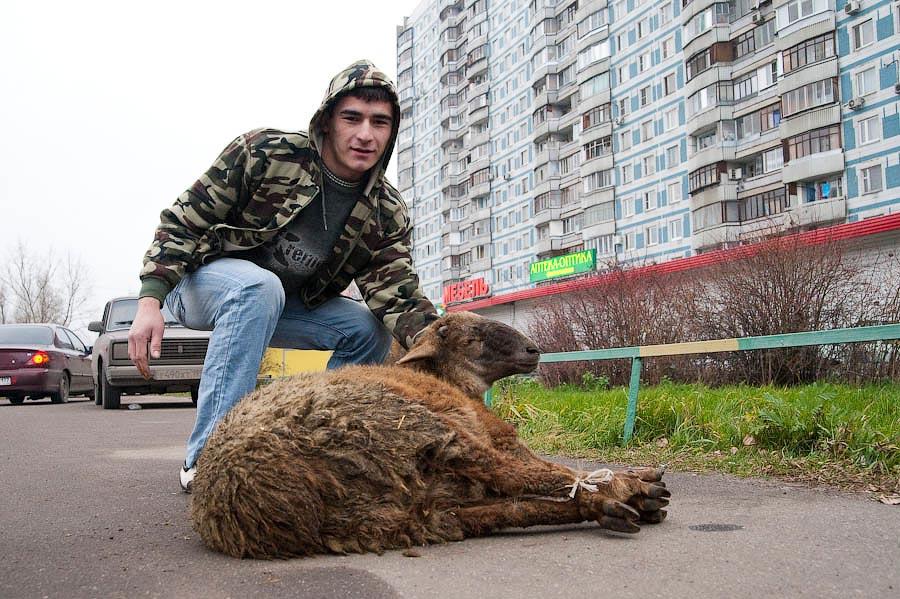 1193 Праздник жертвоприношения Курбан Байрам в Москве